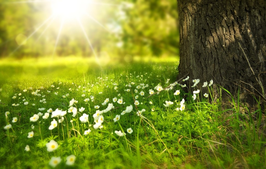 spring-276014_1280-1024x651